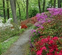 Spring forest lane. Image by Peter Ellis shared under a Creativ Commons, By Attribution license.